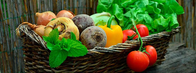 Certos alimentos evitam o surgimento de câncer: verdade ou mentira?